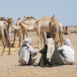 Stock Photo: Bedouin traders at camel market
