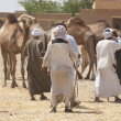 Bedouin traders at a camel market — Stockfoto