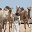 Bedouin trader with camels — Stock Photo #5400545