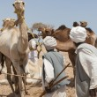 Bedouin traders at a camel market — Stock Photo #5400600
