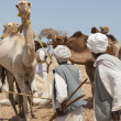 Stock Photo: Bedouin traders at a camel market