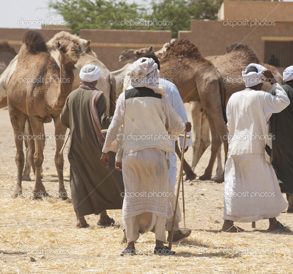 Bedouin traders at an african camel market  Stock Photo #5400062