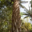 Botanical gardens at Aswan in Egypt — Stock Photo