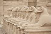 Ram headed sphinxes at Karnak Temple — Stock Photo