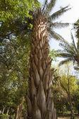 Botanical gardens at Aswan in Egypt — Stock Photo