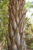 Trunk of a palm tree closeup — Stock Photo