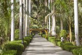 植物园在埃及阿斯旺 — 图库照片