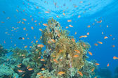 Beautiful coral reef scene — Stock Photo