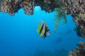 Cocher de la mer rouge sous un surplomb — Photo