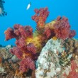 Beautiful soft coral on shipwreck — Stock Photo #6234033