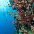 Stunning coral reef wall with divers — Stock Photo