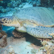 Large green sea turtle on the seabed — Lizenzfreies Foto