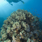 Scuba diver exploring a tropical coral reef — Stock Photo #6234295