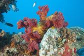 Beautiful soft coral on a shipwreck — Stock Photo