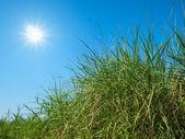 Sol, céu e grama verde — Foto Stock