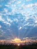 草のシルエットの背後に夕日 — ストック写真