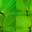 Stock Photo: Palm Leaf radius