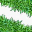 Green Grass Isolated on white — Stockfoto