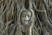 Buddha head Ancient stone carvings — Stock Photo
