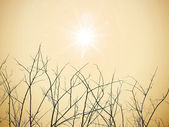 Dry twigs with sun — 图库照片