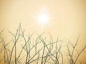 Ramas secas con sol — Foto de Stock
