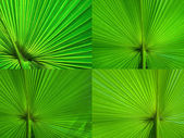 Palm Leaf radius — Stock Photo