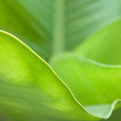 Abstract green leaf — Stock Photo