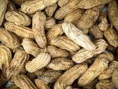 ゆでピーナッツ — ストック写真