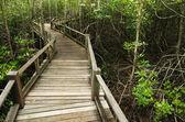 Wood Boardwalks mangrove forest — Stock Photo