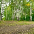 Stock Photo: Forest landscape