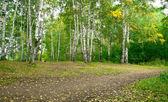 Forest landscape — Stock Photo