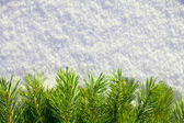 Winter forest background — Stock Photo