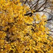 Autumn leaves - Foto de Stock