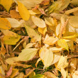 Autumn background - Foto de Stock