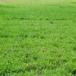 Green grass — Stock Photo #5494661