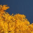 Bright autumn foliage — Stockfoto