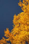明亮的红叶 — 图库照片