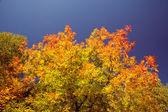 Bright autumn foliage — Stock Photo