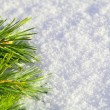 Pine needles on snow — Stock Photo