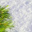 Pine needles on snow — Stock Photo #5613106
