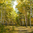 Autumn forest — Stock Photo #5613525
