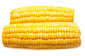 Corn-cob isolated — Stock Photo