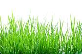 绿草的茎梗 — 图库照片
