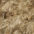 Stock Photo: Grass texture