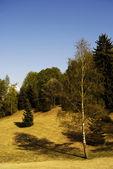 Tiché lesní — Stock fotografie