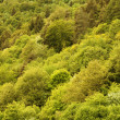 Stock Photo: Forests