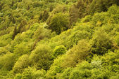 Forests — Stock Photo