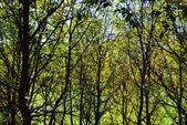Forest panoramic — Stock Photo