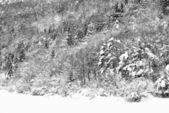замороженные деревья — Стоковое фото