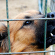 Stock Photo: Dog cage